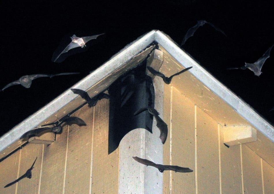bat control arrangements