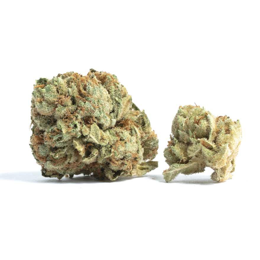 Best Cannabis